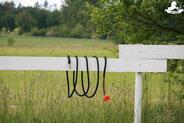Gelassenheitstraining Pferd, Bodenarbeitsseil, Agility Pferd, Bodenarbeit Kurs