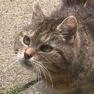 Katze Sky allein zurück geblieben, über Pechpfoten e.V. ein tolles Zuhause gefunden