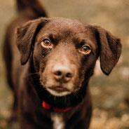 für Bruno hat Pechpfoten e.V. über den Tierschutzverein Bremen ein neues Zuhause finden können
