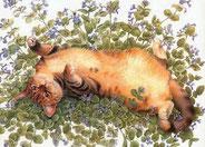 chat qui se roule par terre dans les fleurs