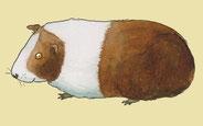 """""""Meerschweinchen"""", Flash-Card, Westermann"""