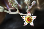 flower plant colors  snake composition creation macro
