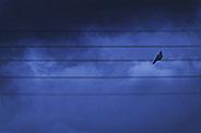 flower  plant colors  composition creation macro sun corona petals