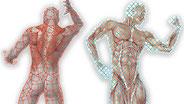 Zerrungen, Verspannungen, Muskelschmerzen?