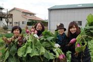 2014年12月 芥屋かぶ収穫体験