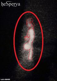 Foto 6A - Contorno figura