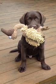 Aktuelle Angebote von Bastis Hunde-Akademie