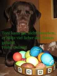 Toni wünscht frohe Ostern indem er hinter einem Korb voller bunter Ostereier liegt.