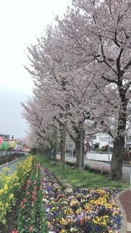 自粛でも希望,saiさん,桜フォトコンテスト,2020,浅草粋や賞