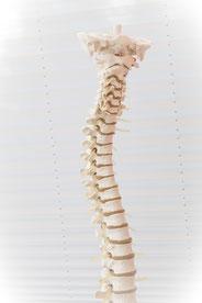 HWS Therapie Behandlung Wirbel Rückenschmerzen Einrenken Physiotherapie Andreas Spätling move Praxis