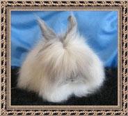 ангорский-карликовый-кролик