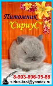 питомник-карликовых-кроликов