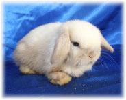 питомник-сириус-кролики
