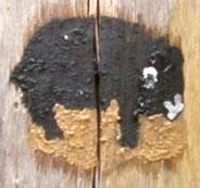 Kunst mit Erdfarben: Wombat