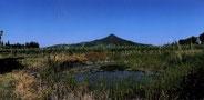 """il Bagno e il Monte Lozzo (da """"I colli euganei"""" a cura di Selmin, ed. CiErre)"""