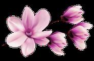 Graphische Darstellung einer Magnolie