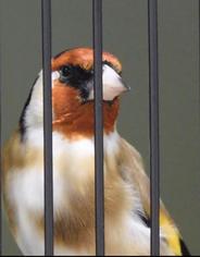 Bundesschau 2019, ab min 12:45 sind auch meine Vögel zu sehen.