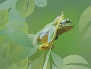 Lurche / Amphibia