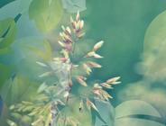 Pflanzen / Plantae