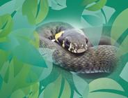 Kriechtiere / Reptilia
