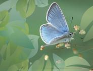 Schmetterlinge / Lepidoptera