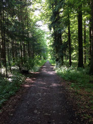 ... garantiert dabei: die schönsten Wald- und Wiesenwege ...