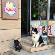www.kassel.enchilada.de