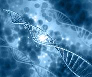 ダメージを受けたDNAの再構築をする。