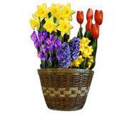 Flower pot full of flowers