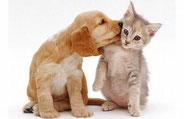 Omega 3 pour les animaux nos amis : SUPER OMEGA - Oméga 3  : les bienfaits santé des oméga 3 - AloeVeraSanté.net