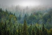 Les massifs forestiers au Québec.