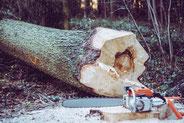 concepteur de jardins paysager dijon, notre paysagiste taille vos arbres en toute sécurité sur dijon et sa région