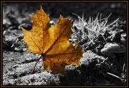 Fotos mit Witz, kreative Bildbearbeitung, HDR, Tonemapping