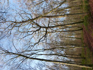 découvrez la forêt du pays d'othe, ses arbres, ses coupes pour replanter.