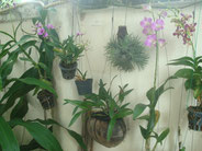Orchideenmauer