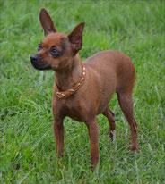 Helenka Proper puppy