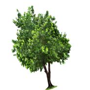 растения талисманы