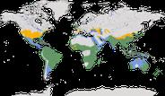 Karten zur Verbreitung der Gattung Egretta