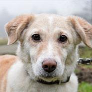 Der kleine Mischling Snowy hat über den Tierschutzverein Pechpfoten e.V. in Wuppertal ein neues Zuhause gefunden