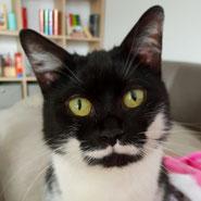 Katze Beany hat über den Tierschutzverein Pechpfoten e.V. ein neues Zuhause gefunden