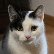 Samtpfote Mina sucht im Tierschutz nach einem neuen Zuhause