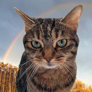 Der kleinen Mina konnte Pechpfoten e.V. nicht mehr rechtzeitig helfen. Sie ist über die Regenbogenbrücke gegangen.