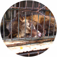 don't support civet coffee