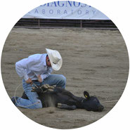 don't support rodeos