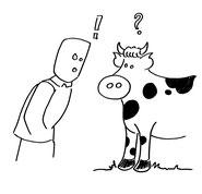 une vache face à un homme qui s'interroge
