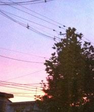 昨日の夕焼けキレイでしたね!治療室の窓から撮ったから写真はちょっと〜ですが、残しておきたい瞬間でした・・・