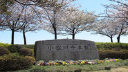 江戸川区 寿司 出前 千本桜
