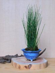 姫とくさ            ¥1,430(税込)        径約9cm×高さ約24cm