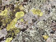 photo gros plan de lichen