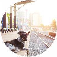 Anfahrt zum Hundesalon Joya mit dem Zug